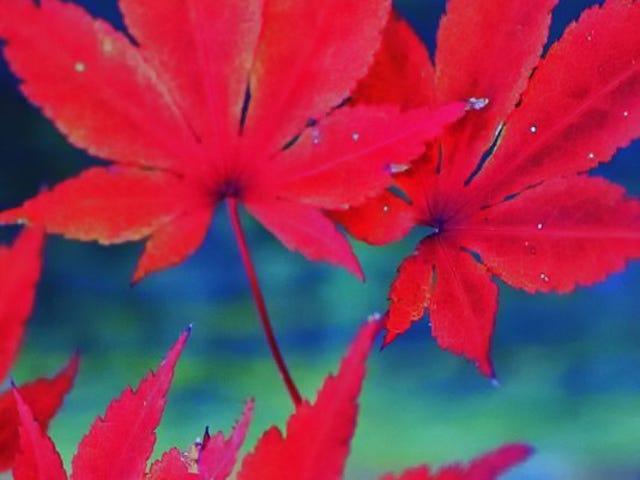 Toddies, Copper-Bottom Pans, Cashmere, & Cuffin': BackTalk Fall Equinox Virgo Season Weekend Jam