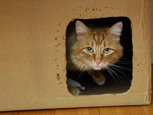 Ilmuwan Menyelamatkan Kucing Schrödinger