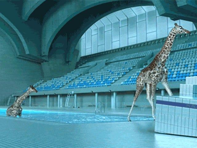 Спостерігаючи за реалістичними жирафами CGI, поринути в басейн - це просто смішне задоволення