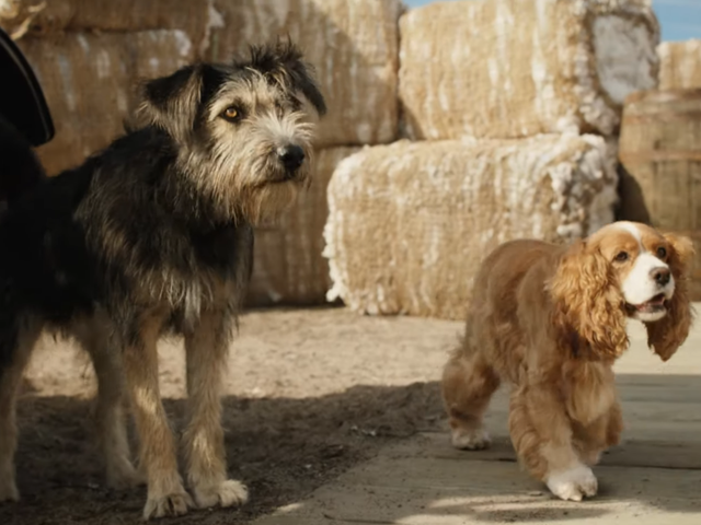 Star Crossed Puppers Shine in the Adorable First Trailer for Disney's Live-Action Lady and The Tramp Remake