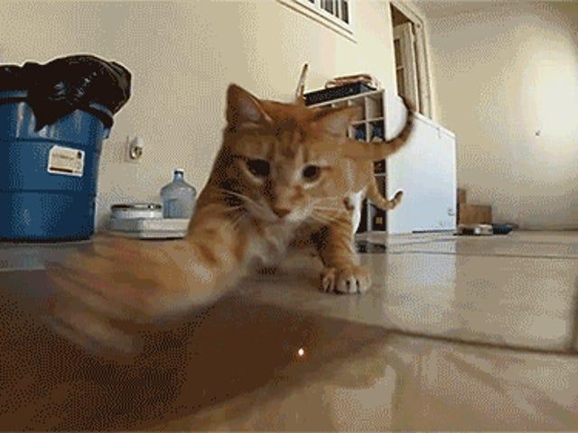 Roomba: Er det verdt det?  (+ kattegifter)