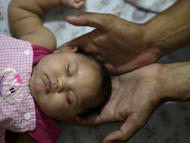CDC підтверджує, що Zika в дев'яти американських вагітностях