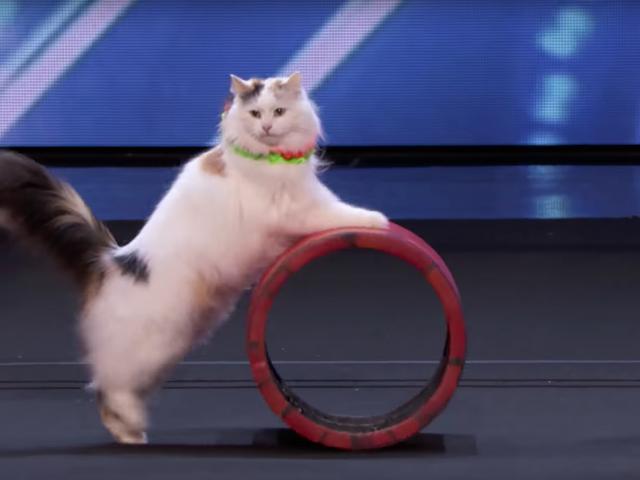 我受到这些令人难以置信的敏捷马戏表演猫的启发