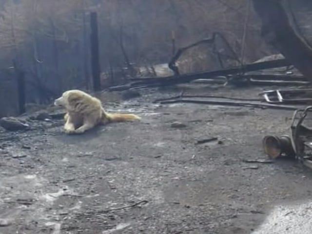 God dreng, som overlevede lejren, brandede sin familie hjem i næsten en måned