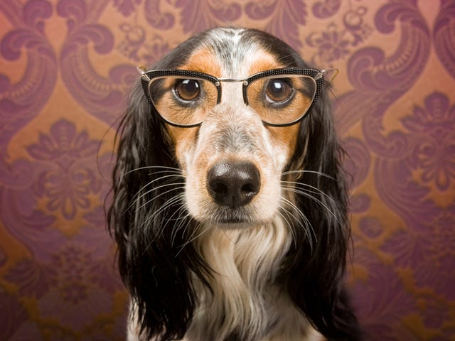 People Think Their Dogs Are A Lot Smarter Than They Really Are