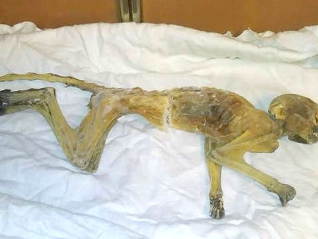 Did Facebook Sleuths Get to the Bottom of Minnesota's Mummified Monkey Mystery?