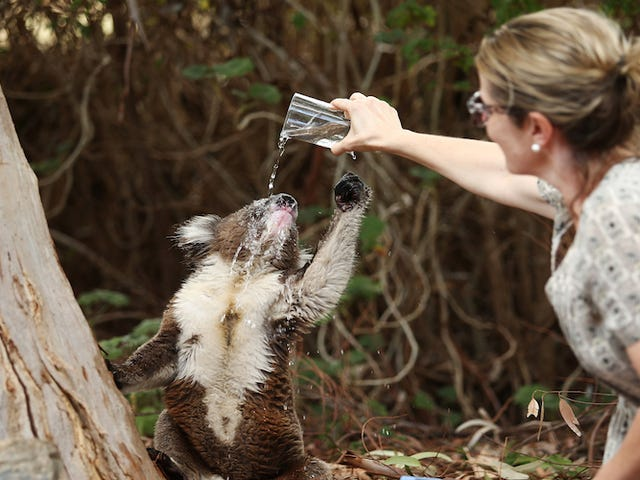 Đâu là Kickstarter cho Koala Bao cao su