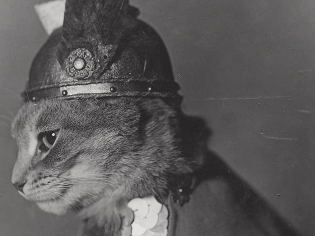 Ogle Disse Vintage Public Domain Cat Pictures Fra Library of Congress