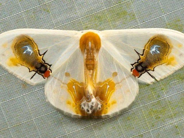 gusano parásito que sale de la mantis religiosa