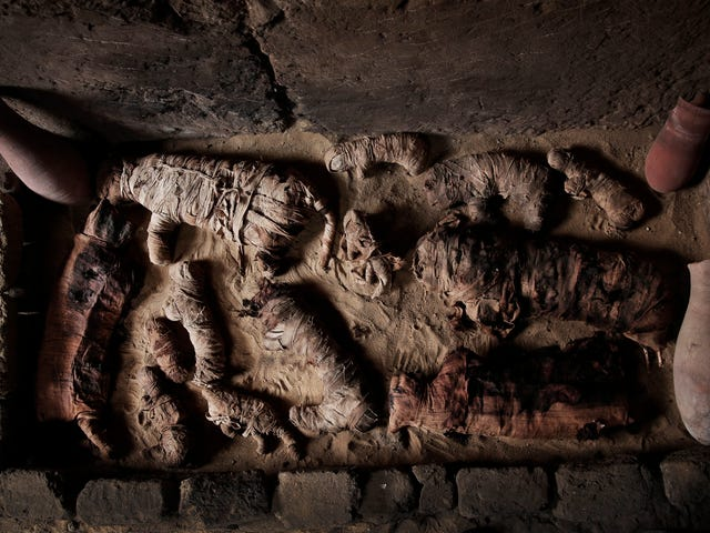 Ancient Cat Mummies and More Discovered in Egyptian Tombs