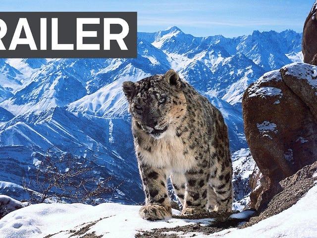Planet Earth II Trailer er bare utroligt