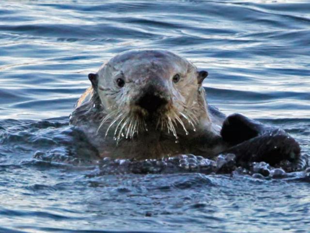 Herzlichen Glückwunsch an das Monterey Bay Aquarium für die Arbeit an ihren Problemen