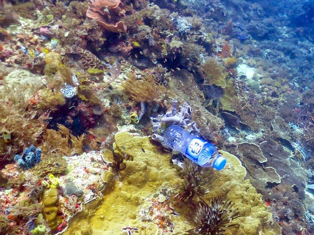 We're Poisoning Coral Reefs With Plastic