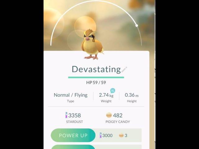 El jugador de Pokémon Go encuentra un uso para todos esos Pidgeys