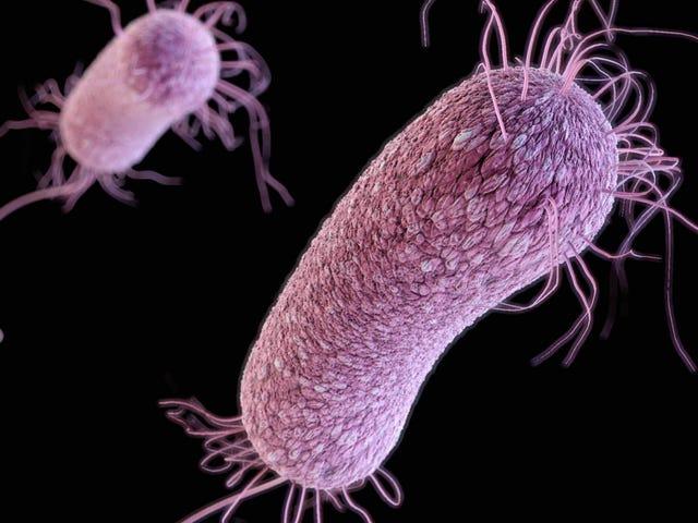 Tomó solo tres semanas para que Superbug resistiera el medicamento de último recurso, dicen los médicos