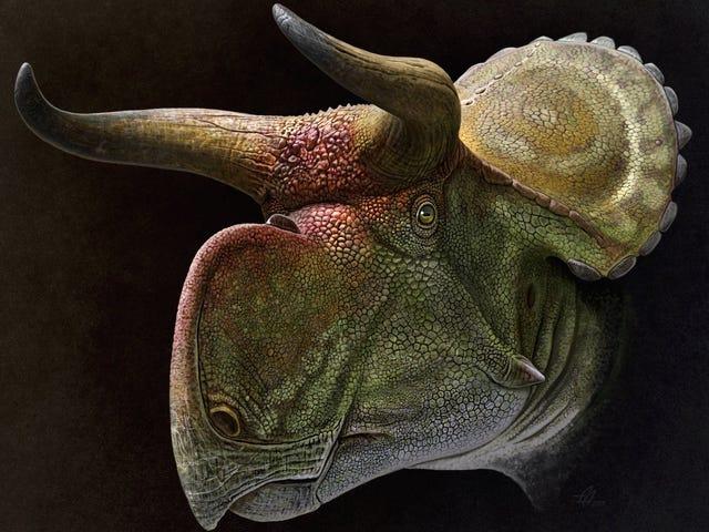 El misterio de los dinosaurios con cuernos parece resuelto, y su explicación es más simple de lo que se pensaba