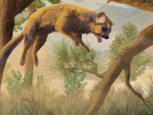 Prehistoric 'Cat' Skull Actually Belonged to an Ancestor of Modern Wolverines