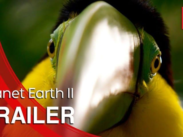 Sir David Attenborough kehrt zum Planeten Erde zurück