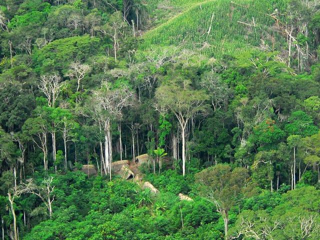 Verdediger van de inheemse stammen van Brazilië vermoordde 'Execution-Style' in Amazon Town