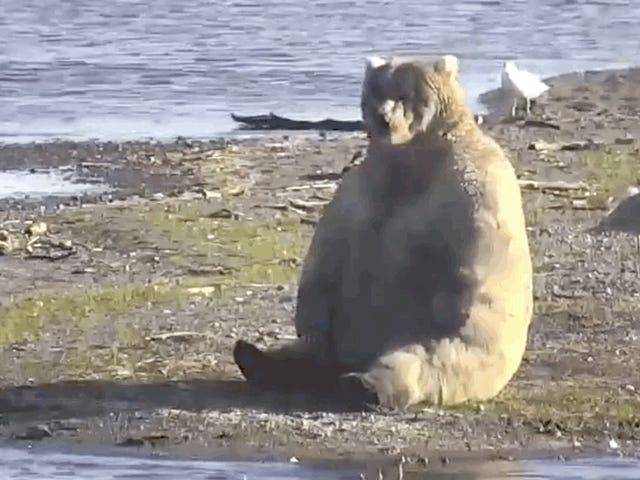 Fat Bear Week Is Back