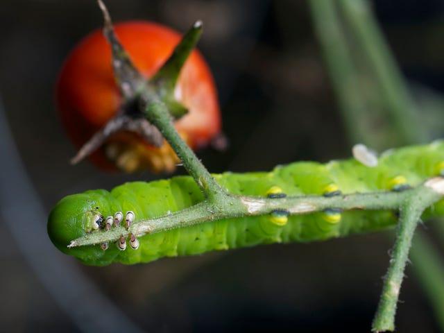 Τα φυτά μετατρέπουν τις καμπίνες σε κανιβάλια για να σώσουν τον εαυτό τους