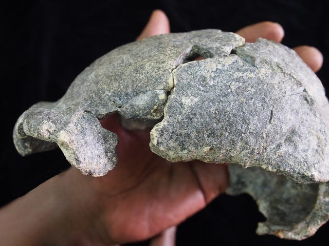 Extinct Humans May Have Passed Down Stone Technology for Thousands of Generations