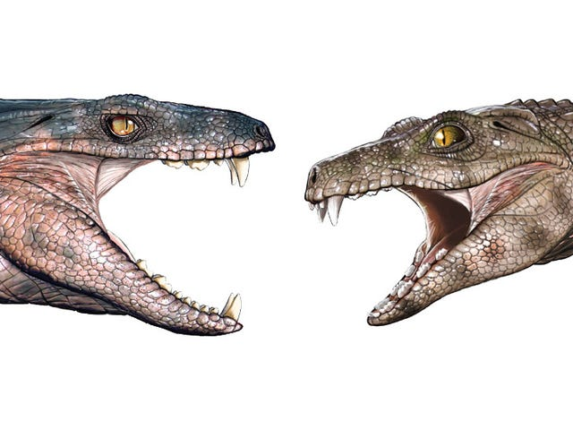 Fossilized Teeth Suggest Some Ancient Crocodiles Were Vegetarians