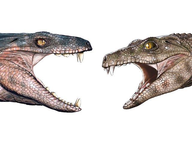Gigi Fosil Cadangkan Sesetengah Buaya Purba Adakah Vegetarians