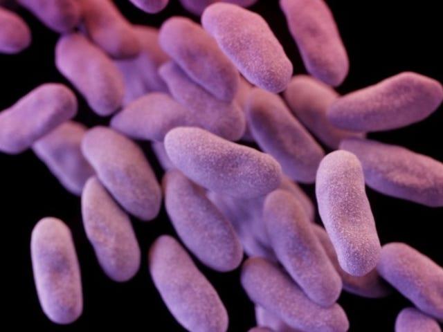 Esa aterradora superbacteria resistente a los antibióticos ahora está en los EE. UU.
