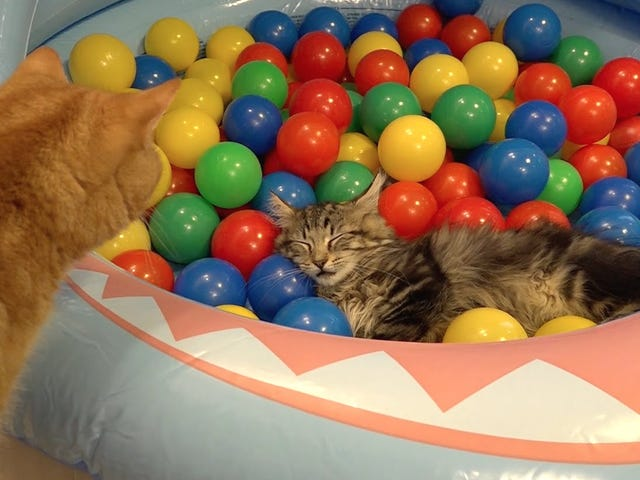 Caturday! ~~~~~Cats And Balls!```````