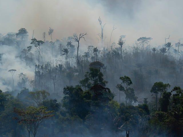 Οι πυρκαγιές των δασών του Αμαζονίου προκαλούν απειλή για την υγεία στα παιδιά, προειδοποιεί ΠΟΥ