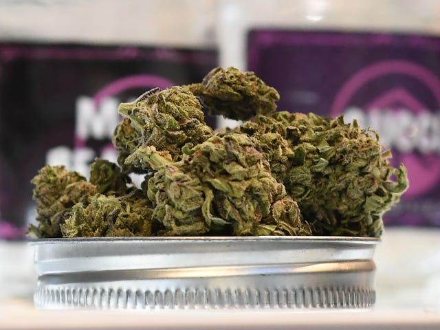 Puf, Puf, Geçiş: Marijuana California Jan.