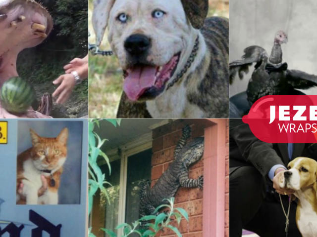 Dog Travolta, Big Ass Lizard og Carly Fiorina's Struggle Turkey: The Best Animals of 2015