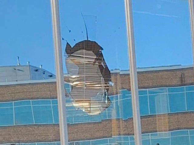 Turkki Vulture lentää Stephen A. Smithin Office-ikkunassa lintuyrityksessä