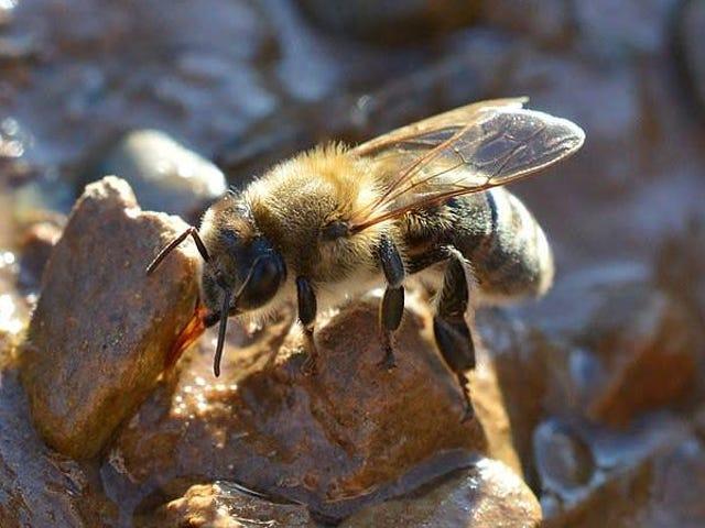 私はあなたにミツバチについて非常に重要なことを話さなければなりません