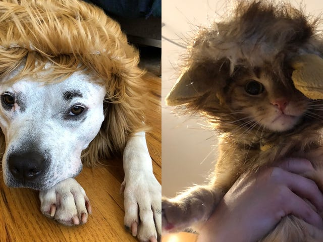 """<a href=""""https://kinjadeals.theinventory.com/dress-up-your-pet-with-25-off-a-bunch-of-different-cos-1828225012"""" data-id="""""""" onClick=""""window.ga('send', 'event', 'Permalink page click', 'Permalink page click - post header', 'standard');"""">Dress Up Your Pet With 25% Off a Bunch of Different Costumes</a>"""