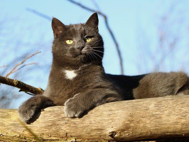 Años de gato vs años de persona: Somí envejecen realmente los gatos domésticos