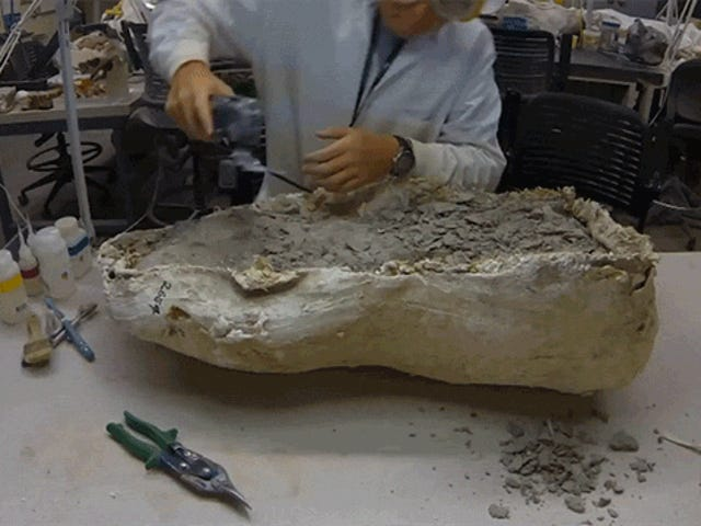 Watch How Fossils Get Cleaned and Prepared
