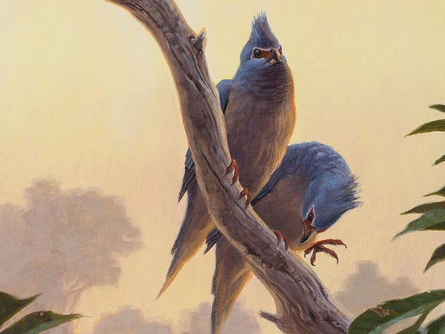 Birds Wasted No Time Taking Over the World Once the Dinosaurs Croaked