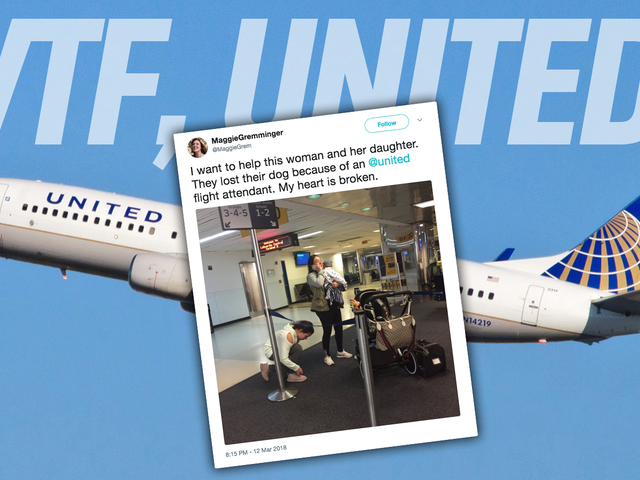 Dog Dies On United Flight After Flight Attendant Forces Him To Ride In Overhead Compartment