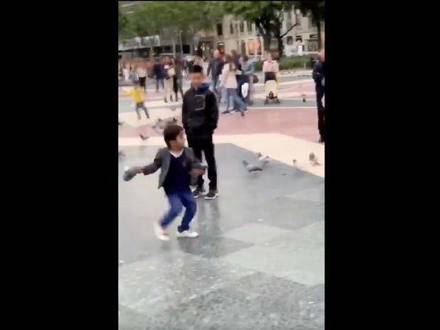 Young Child Demonstrates Impressive Pigeon-Throwing Abilities To Confused, Scared Onlookers