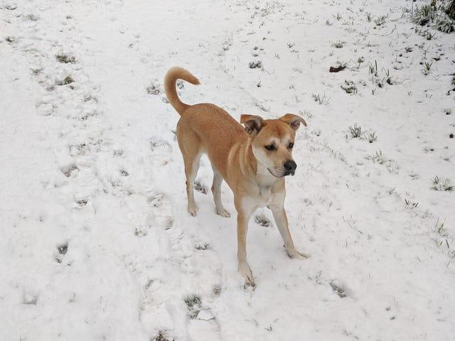Snow doggo