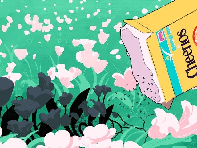 "Ikke plant de ""Bee-Friendly"" Wildflowers Cheerios gir bort"