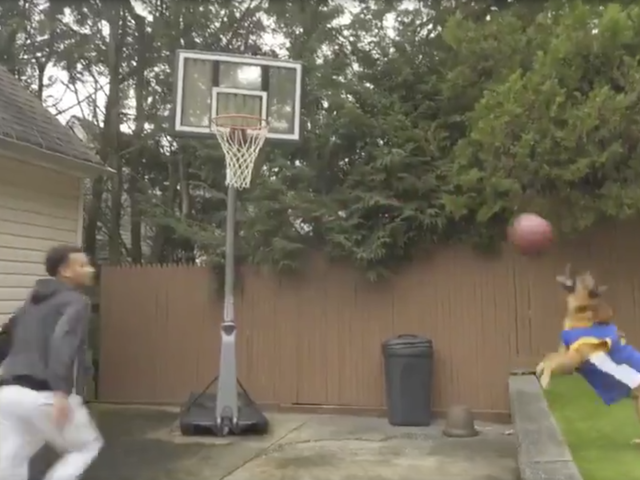 Good Dog Throws A Mean Alley-Oop