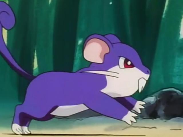 Guy tira fuori i <em>Pokémon</em> Permadeath Run Only usando un rattata