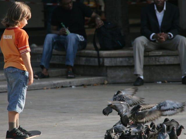 Parisierne siger 'non et non!'  ved frigørelse af fugle på lokale duer