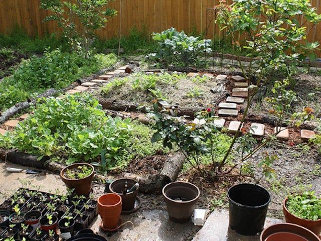 Những câu hỏi cần hỏi khi chọn cây cho khu vườn của bạn