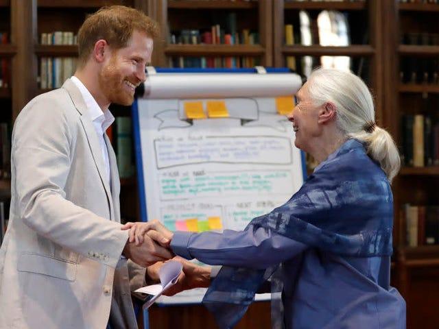 What Else Is Jane Goodall Hiding?