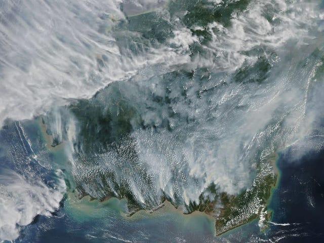 煙で満たされた衛星画像はインドネシアの山火事の妨害範囲を明らかにする
