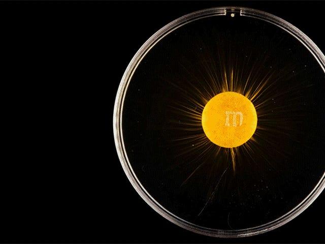 M & M의 폭발이 초신성 폭발처럼 보임